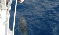 korfu-delfinek