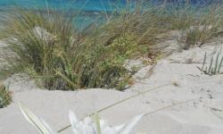 espalmador-homokdunei