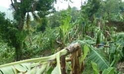 karib20100150