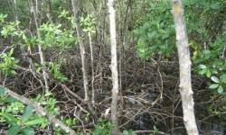 karib2010v0101