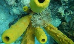 A víz alatt