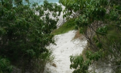 Ösvény a sziget belseje felé