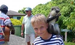 Két majom