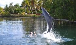 cayo-largo-delfin
