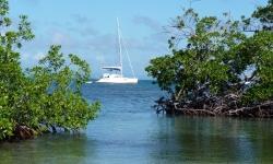 cuba-hajoberles-mangrove
