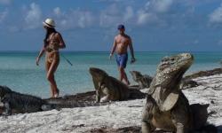 cuba-iguanak-szigete