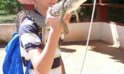 cuba-krokodil