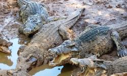 cuba-krokodilfarm