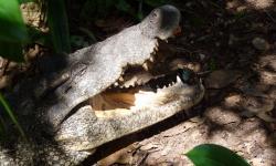 krokodilfarm-cuba
