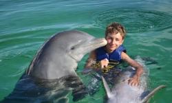 kuba-delfinek