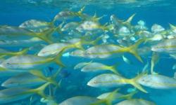 kuba-halak-a hajonal
