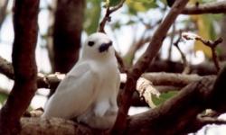 madarak-szigete